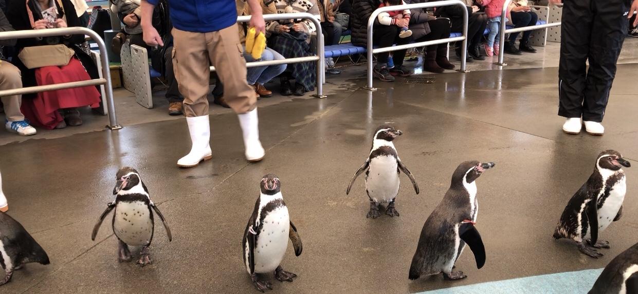 鳥羽 ペンギン
